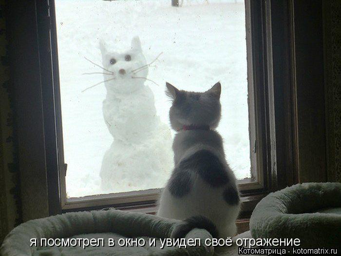 Котоматрица: я посмотрел в окно и увидел своё отражение
