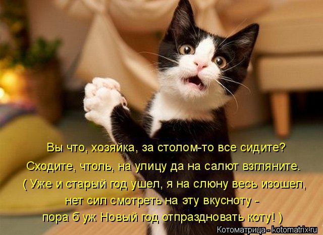 Котоматрица: Сходите, чтоль, на улицу да на салют взгляните. нет сил смотреть на эту вкусноту -  пора б уж Новый год отпраздновать коту! ) ( Уже и старый год