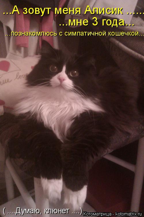 Котоматрица: ( ....Думаю, клюнет ....) ...мне 3 года... ...А зовут меня Алисик ...... ...познакомлюсь с симпатичной кошечкой...