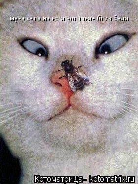 Котоматрица: муха села на кота вот такая блин беда