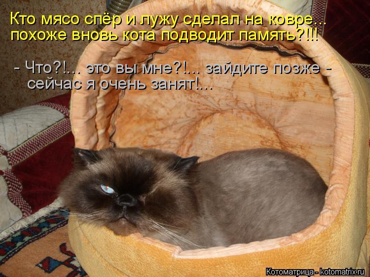 Котоматрица: Кто мясо спёр и лужу сделал на ковре... похоже вновь кота подводит память?!!! - Что?!... это вы мне?!... зайдите позже - сейчас я очень занят!...