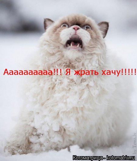 Котоматрица: Аааааааааа!!! Я жрать хачу!!!!!!