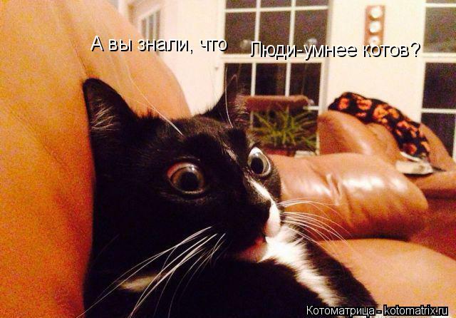 Котоматрица: А вы знали, что  Люди-умнее котов?