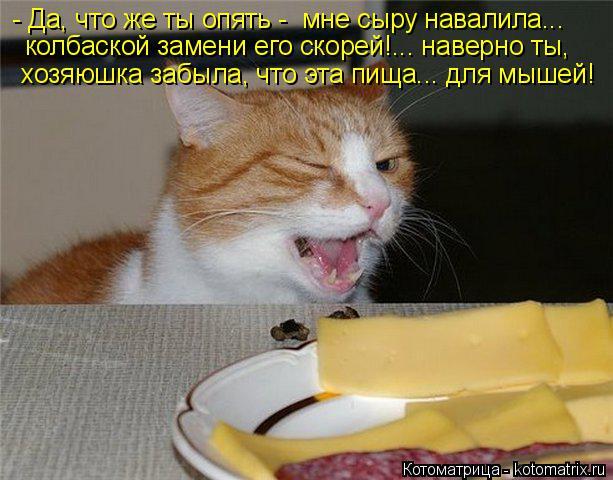 Котоматрица: - Да, что же ты опять -  мне сыру навалила... колбаской замени его скорей!... наверно ты, хозяюшка забыла, что эта пища... для мышей!