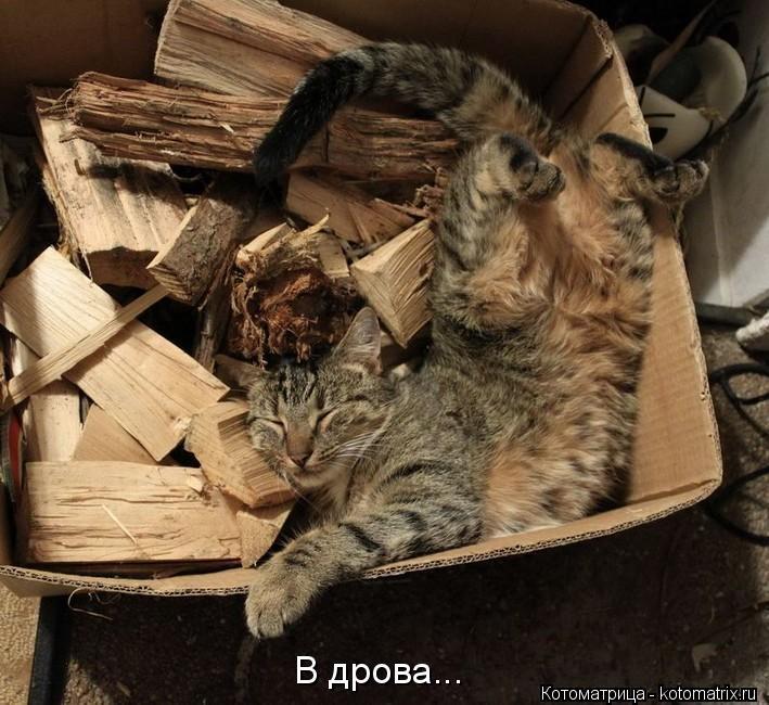 Котоматрица: В дрова...