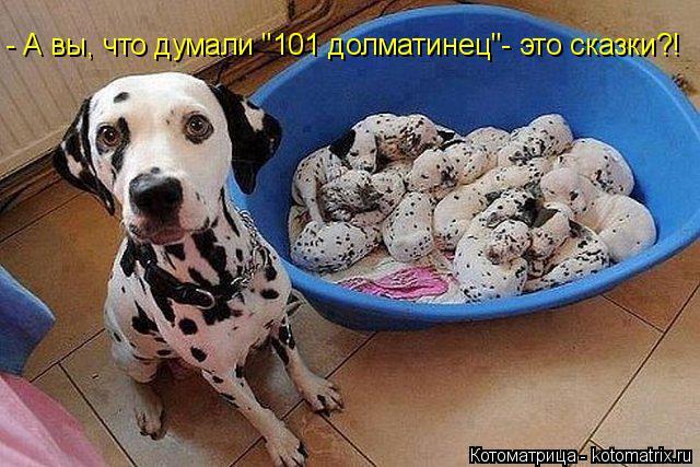 """Котоматрица: - А вы, что думали """"101 долматинец""""- это сказки?!"""