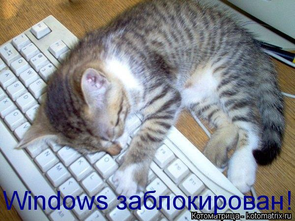 Котоматрица: Windows заблокирован!