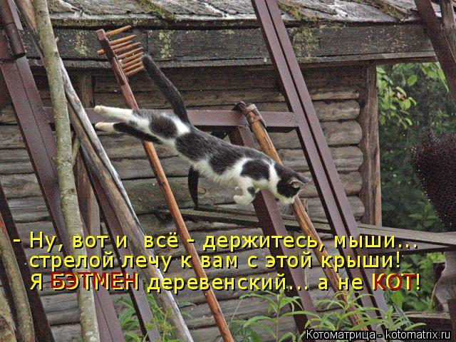 Котоматрица: - Ну, вот и  всё - держитесь, мыши... стрелой лечу к вам с этой крыши! Я БЭТМЕН деревенский... а не КОТ! БЭТМЕН КОТ