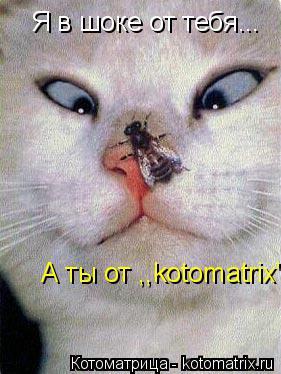 """Котоматрица: Я в шоке от тебя... А ты от ,,kotomatrix"""".."""