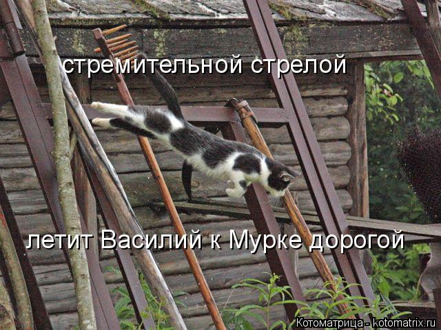 Котоматрица: стремительной стрелой летит Василий к Мурке дорогой