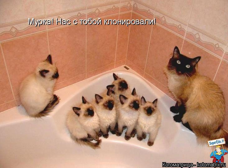 Котоматрица: Мурка! Нас с тобой клонировали!