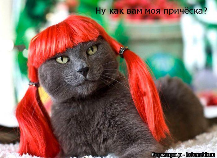 Котоматрица: Ну как вам моя причёска?