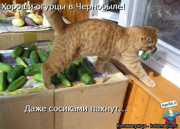 Котоматрица: Хороши огурцы в Чернобыле! Даже сосиками пахнут...