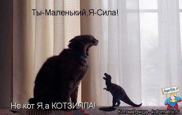 Котоматрица: Ты-Маленький,Я-Сила! Не кот Я,а КОТЗИЛЛА!