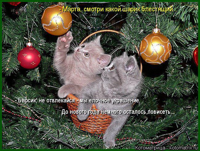 Котоматрица: - Марта, смотри какой шарик блестящий... - Барсик, не отвлекайся - мы елочное украшение.  До нового года немного осталось повисеть...