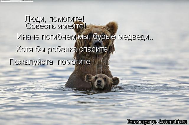 Котоматрица: Люди, помогите! Совесть имейте! Иначе погибнем мы, бурые медведи.. Хотя бы ребенка спасите! Пожалуйста, помогите..