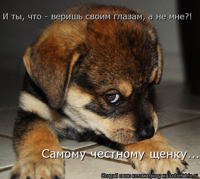 Котоматрица: И ты, что - веришь своим глазам, а не мне?!  Самому честному щенку...