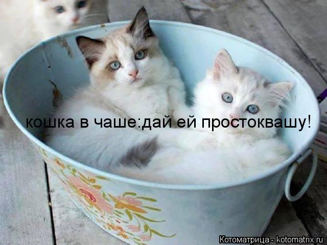 Котоматрица: кошка в чаше:дай ей простоквашу!