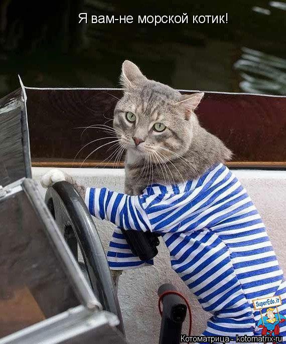 Котоматрица: Я вам-не морской котик!