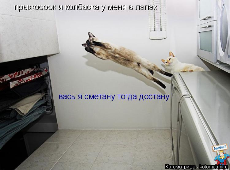 Котоматрица: прыжоооок и колбаска у меня в лапах вась я сметану тогда достану