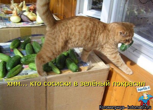 Котоматрица: хмм... кто сосиски в зелёный покрасил