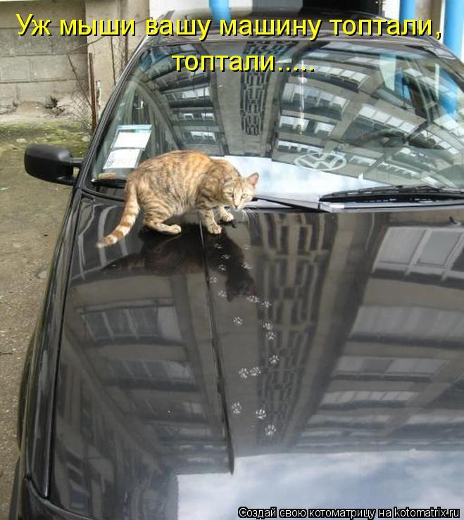 Котоматрица: Уж мыши вашу машину топтали, топтали.....
