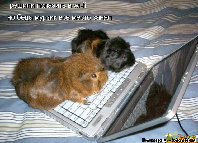 Котоматрица: решили полазить в wi-fi  но беда мурзик всё место занял
