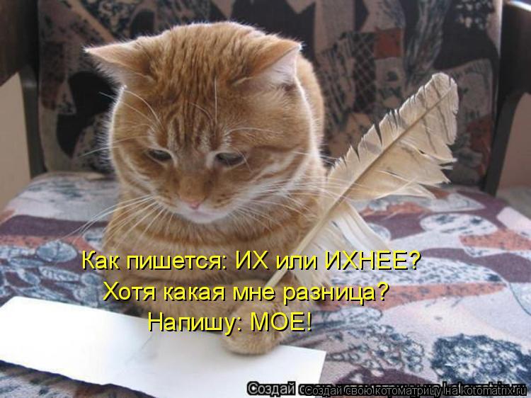 Котоматрица: Как пишется: ИХ или ИХНЕЕ? Хотя какая мне разница? Напишу: МОЕ!