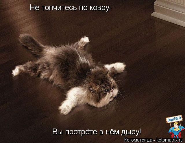 Котоматрица: Не топчитесь по ковру- Вы протрёте в нём дыру!