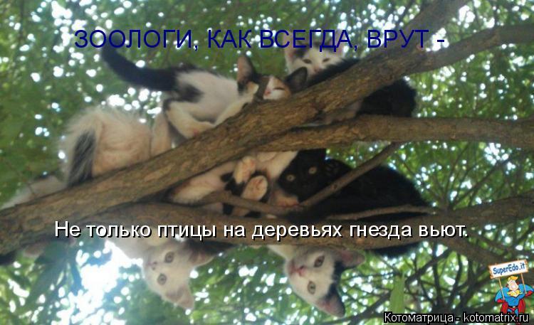Котоматрица: Не только птицы на деревьях гнезда вьют. ЗООЛОГИ, КАК ВСЕГДА, ВРУТ -