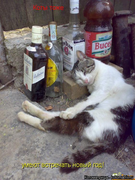 Котоматрица: Коты тоже умеют встречать новый год!