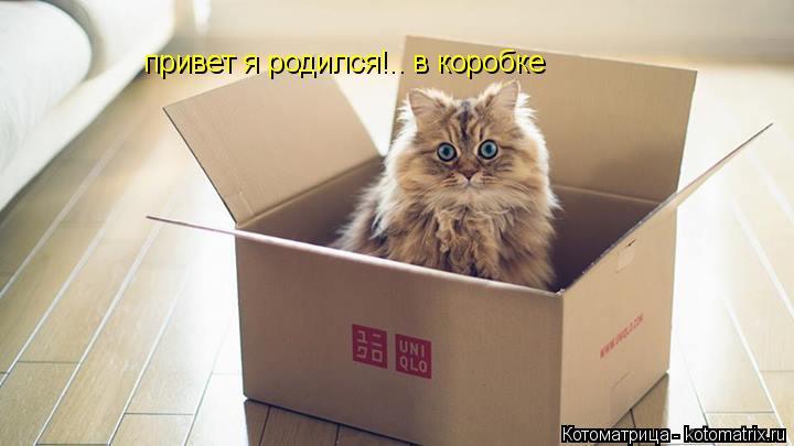 Котоматрица: привет я родился!.. в коробке