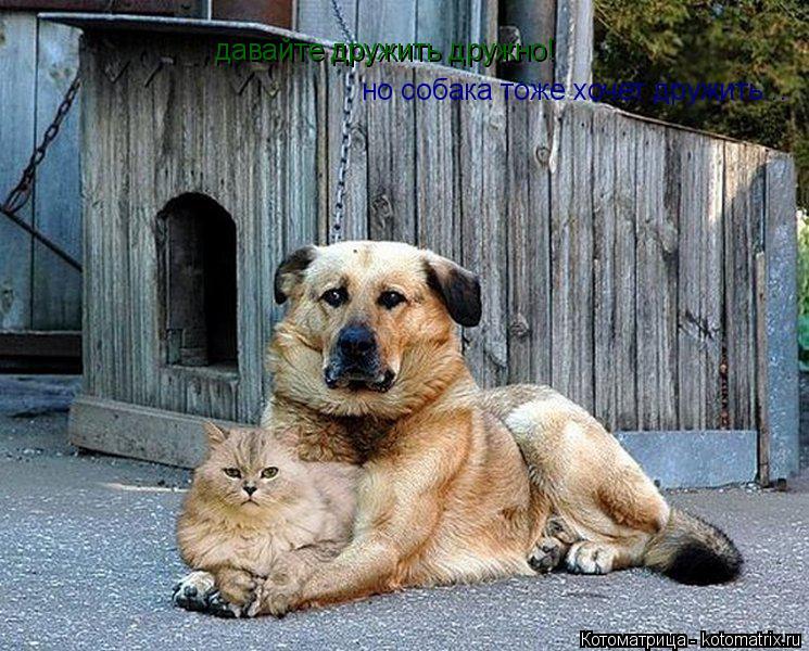 Котоматрица: давайте дружить дружно! но собака тоже хочет дружить...