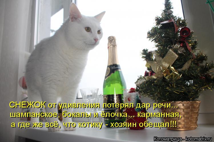 Котоматрица: СНЕЖОК от удивления потерял дар речи... шампанское, бокалы и ёлочка... карманная, а где же всё, что котику - хозяин обещал!!!