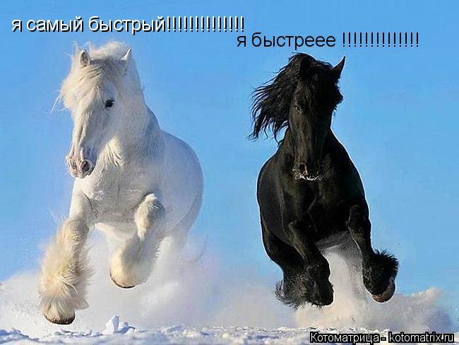 Котоматрица: я самый быстрый!!!!!!!!!!!!!! я быстреее !!!!!!!!!!!!!!