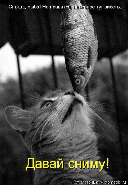 Котоматрица: - Слышь, рыба! Не нравится, наверное тут висеть... Давай сниму!