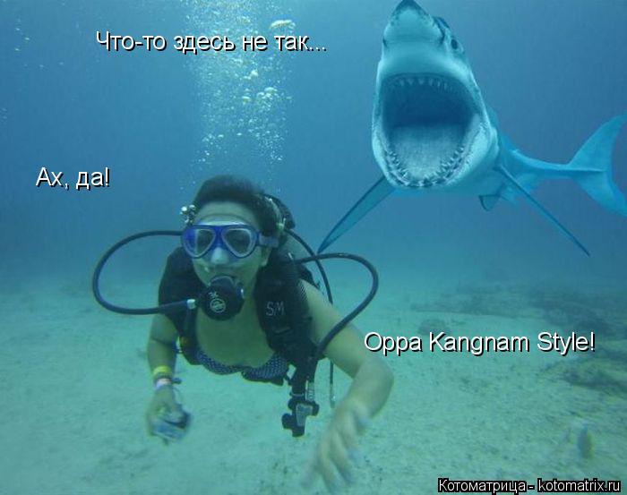 Котоматрица: Что-то здесь не так... Ах, да! Oppa Kangnam Style!