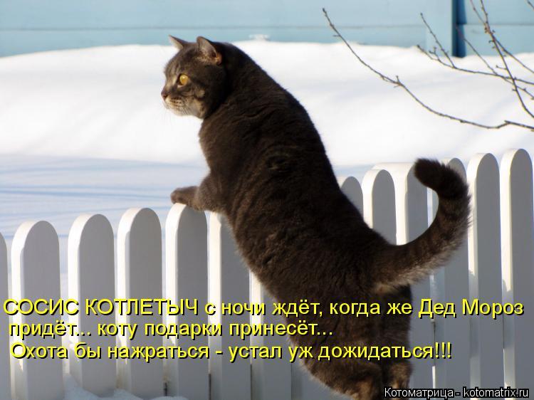 Котоматрица: СОСИС КОТЛЕТЫЧ с ночи ждёт, когда же Дед Мороз придёт... коту подарки принесёт... Охота бы нажраться - устал уж дожидаться!!!