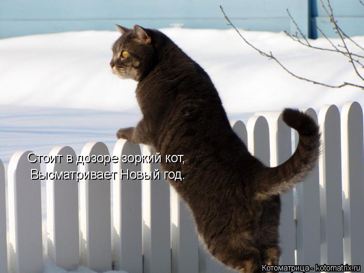 Котоматрица: Стоит в дозоре зоркий кот, Высматривает Новый год.
