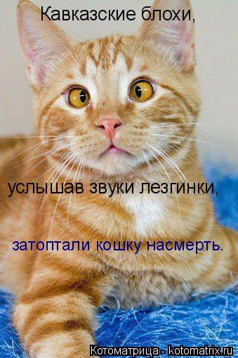 Котоматрица: Кавказские блохи, услышав звуки лезгинки, затоптали кошку насмерть.