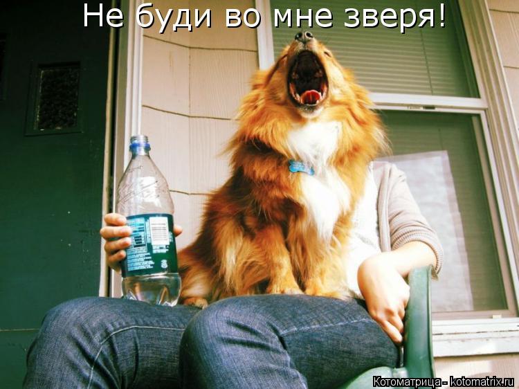 Котоматрица: Не буди во мне зверя!
