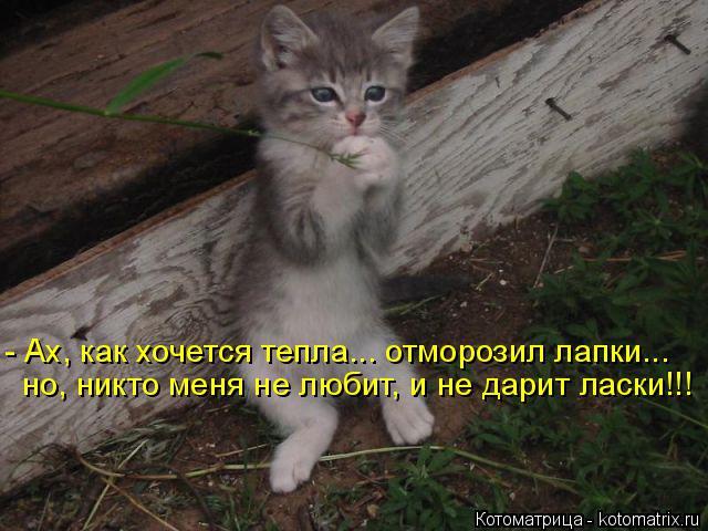 Котоматрица: - Ах, как хочется тепла... отморозил лапки... но, никто меня не любит, и не дарит ласки!!!