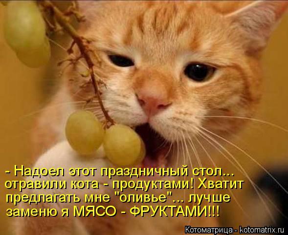 """Котоматрица: - Надоел этот праздничный стол... отравили кота - продуктами! Хватит предлагать мне """"оливье""""... лучше заменю я МЯСО - ФРУКТАМИ!!!"""