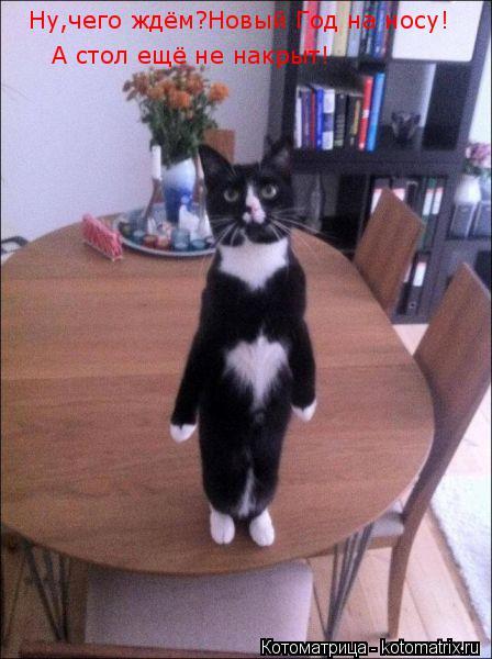 Котоматрица: Ну,чего ждём?Новый Год на носу!  А стол ещё не накрыт!