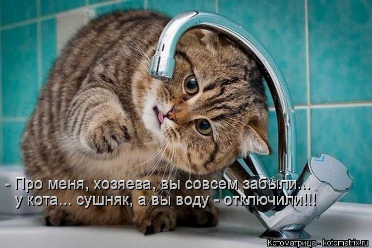Котоматрица: - Про меня, хозяева, вы совсем забыли... у кота... сушняк, а вы воду - отключили!!! у кота... сушняк, а вы воду - отключили!!! - Про меня, хозяева, вы сов