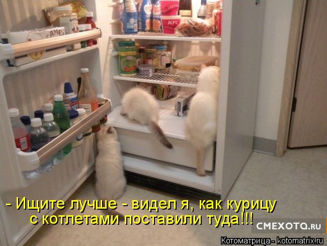 Котоматрица: - Ищите лучше - видел я, как курицу с котлетами поставили туда!!!