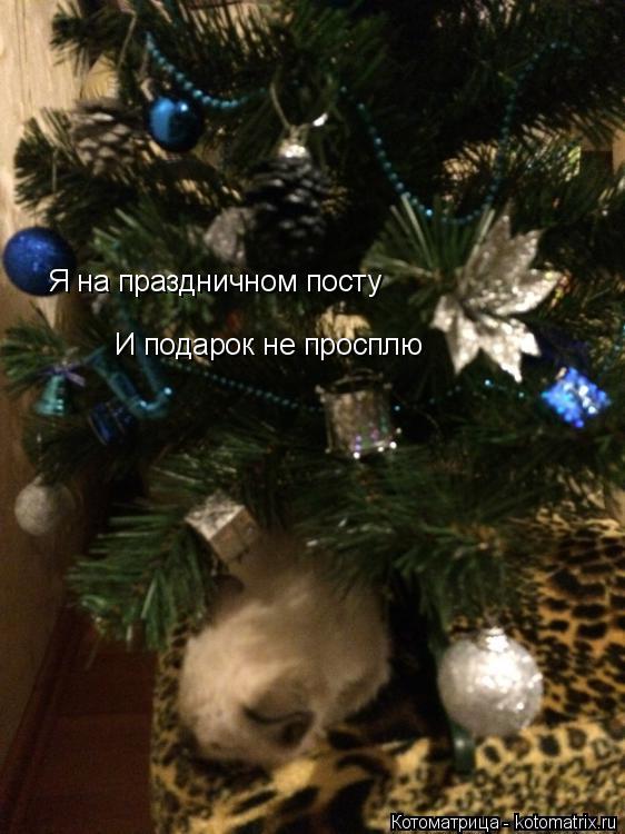 Котоматрица: Я на праздничном посту И подарок не просплю