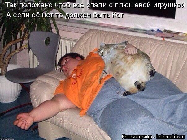Котоматрица: Так положено чтоб все спали с плюшевой игрушкой А если её нет то должен быть Кот