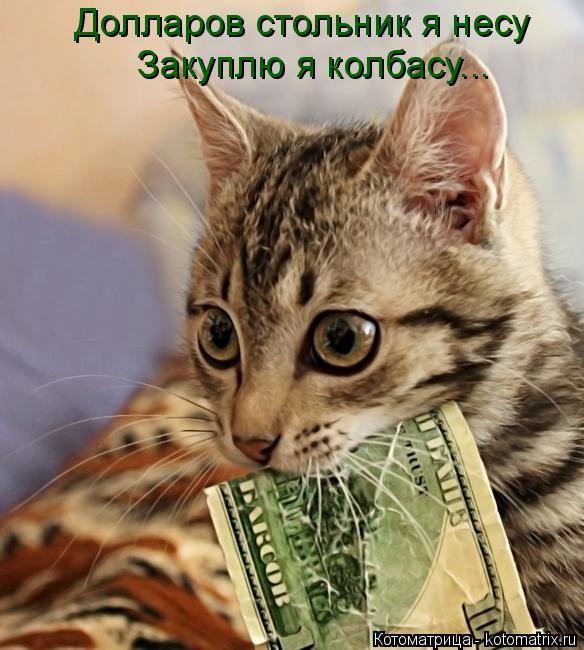 Котоматрица: Долларов стольник я несу Закуплю я колбасу...