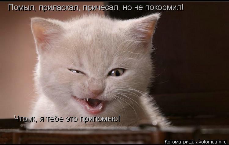 Котоматрица: Помыл, приласкал, причесал, но не покормил! Что ж, я тебе это припомню!